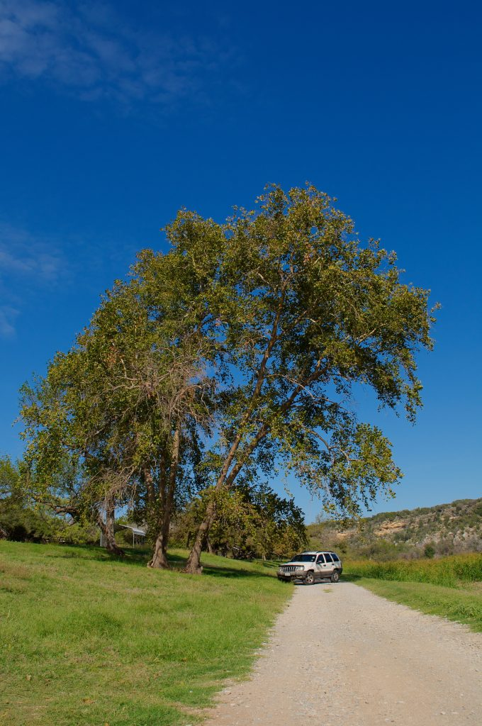 A jeep next to a giant tree in the middle of nowhere.